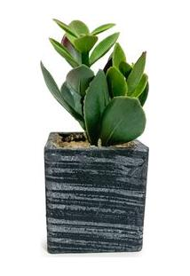 Vaso Com Suculenta Artificial Planta De Jade - Único